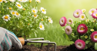 How to locate a Good Landscaping Company
