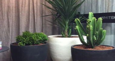4 Cactus Plants For Your Garden