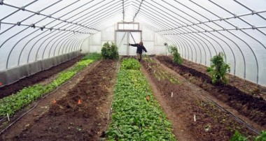 You will become restless by knowing these benefits of greenhouse